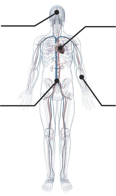 kaj je cbd in kako učinkuje na telo