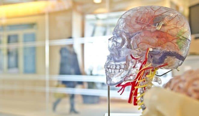 vpliv cbd na možgane in nevrološki učinki